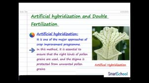 artificial_hybridization_and_double_fertilization