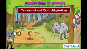 adaptations_in_animals