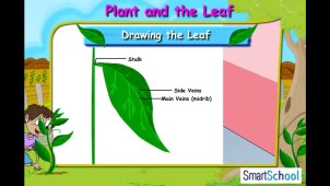 plants_and_the_leaf