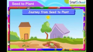 seed_to_plant