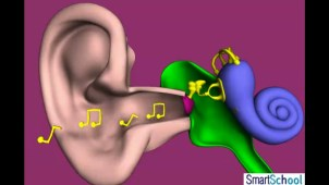 structure_of_human_ear