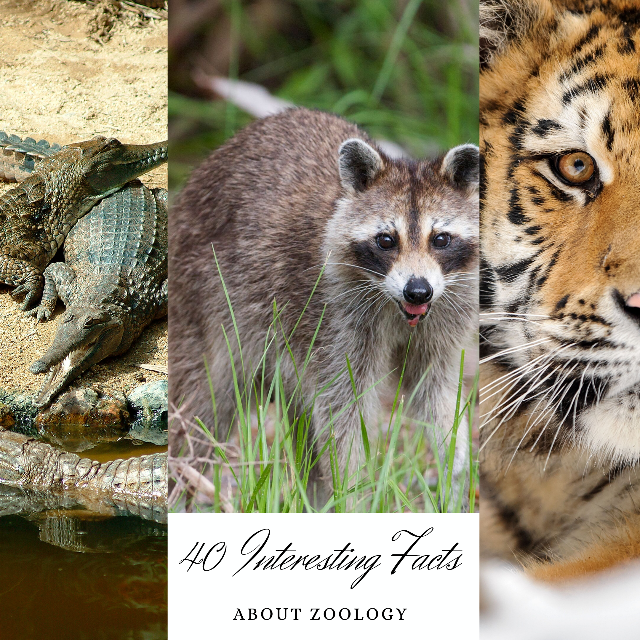 40 Amazing Facts about Zoology